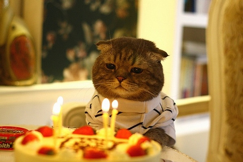 happy birthday kitty pictures