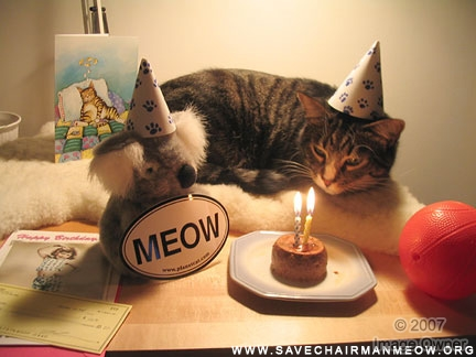 Happy Birthday Kitty Pics