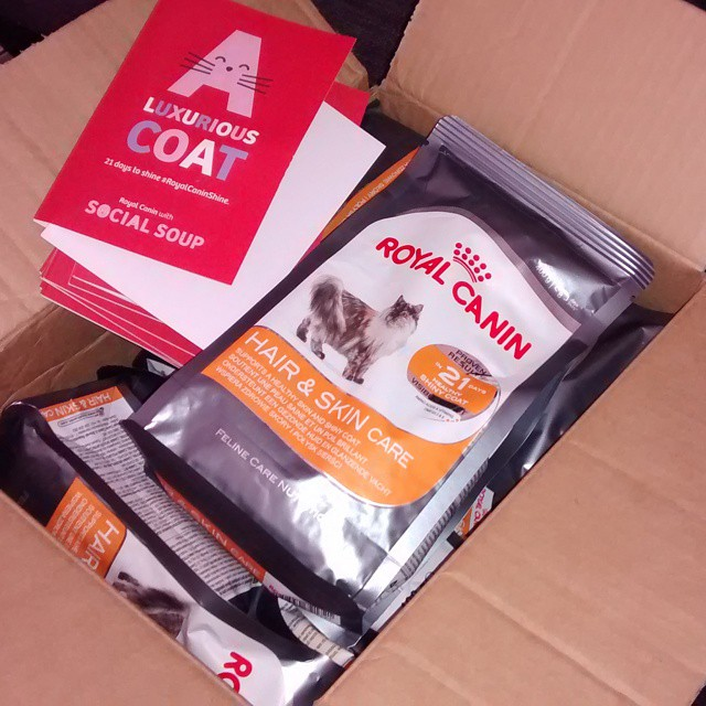 Huge box of cat food to try! #RoyalCaninShine @socialsoup