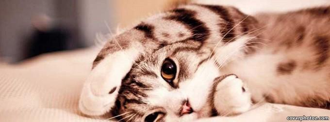 kittyhide