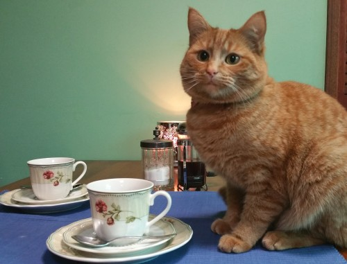 Ginger cat with cup of tea