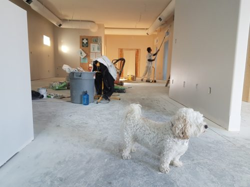painting interior and a cute puppy